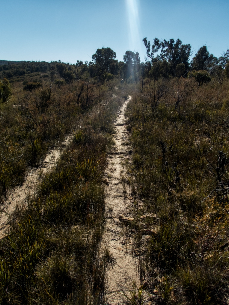 dumbano fire trail-10.jpg