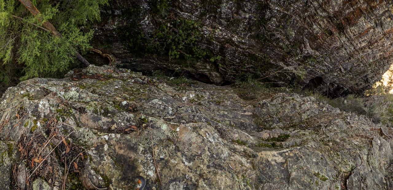 Tiger Snake-3.jpg