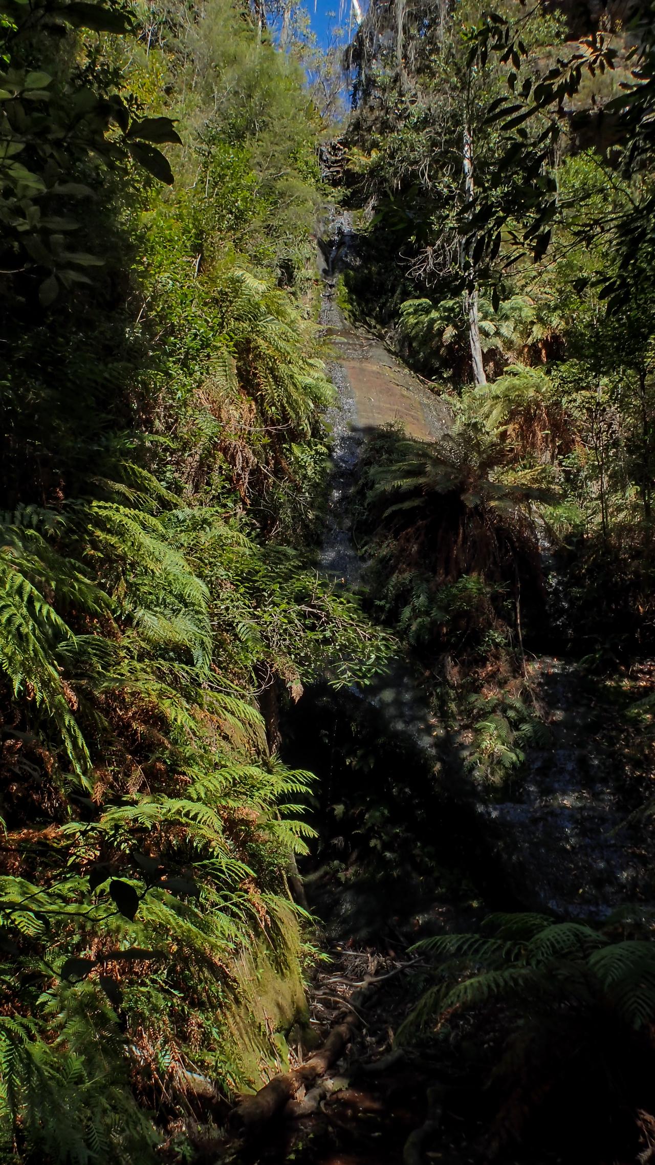 coachwood rocky creek-1.jpg