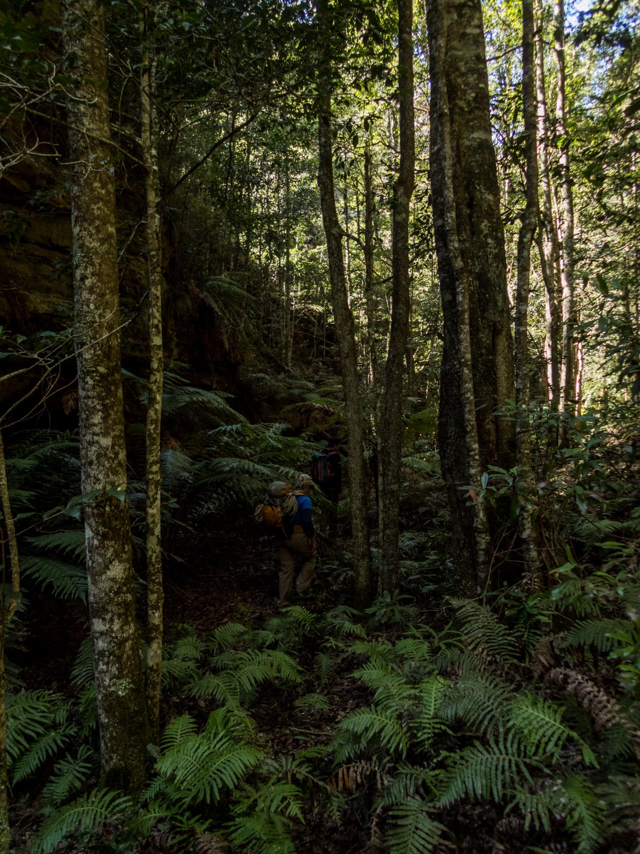 coachwood rocky creek-2.jpg