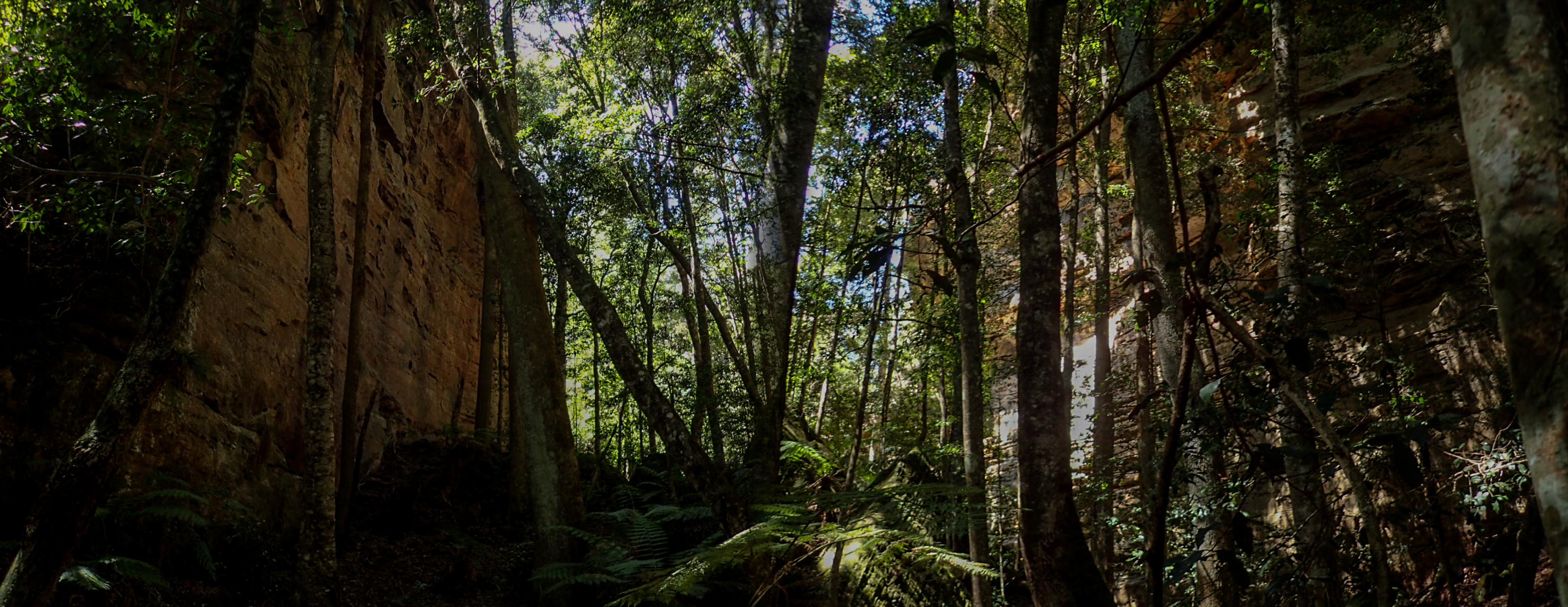 coachwood rocky creek-4.jpg