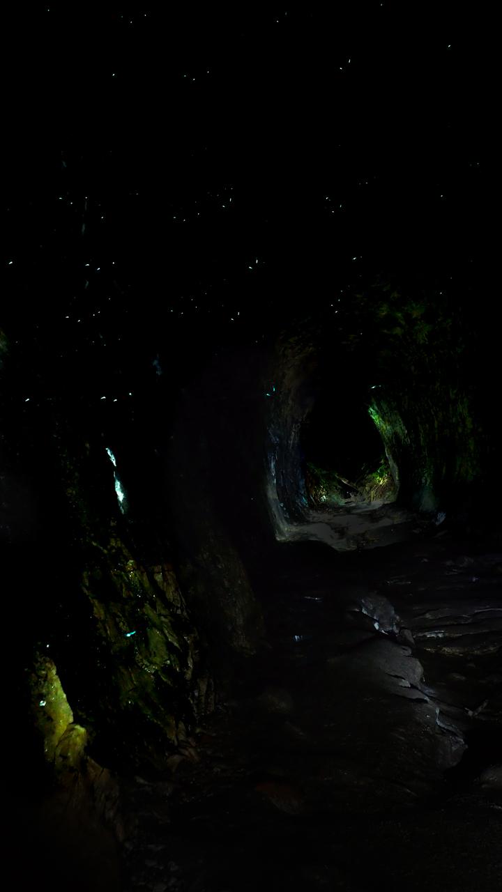 glowworm a-1.jpg