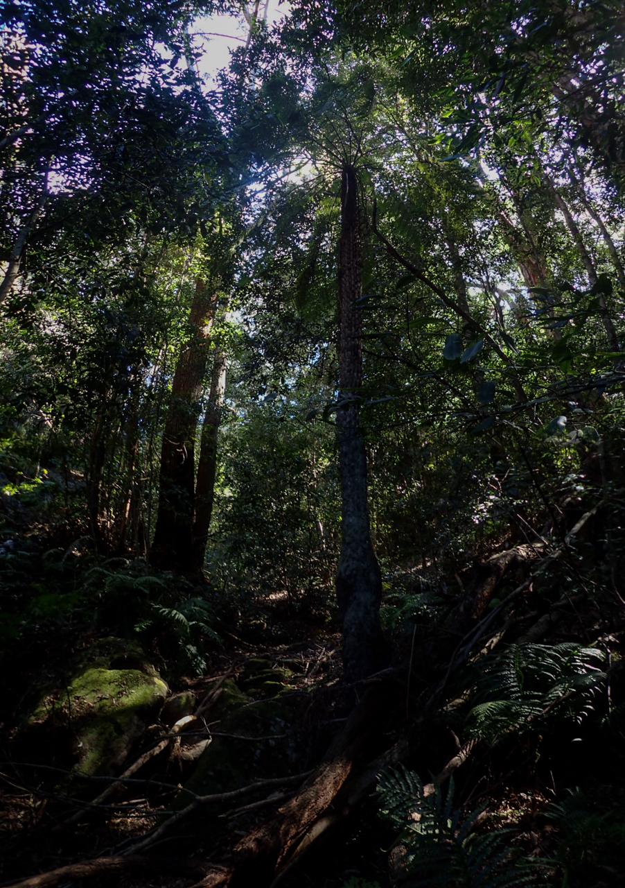 Timber chute-16.jpg