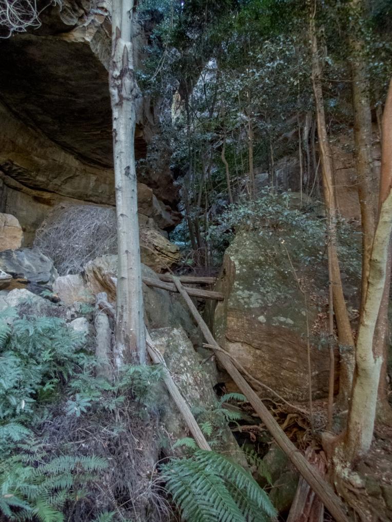 Timber chute-6.jpg